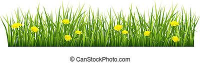 花, 草, 黄色