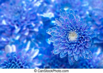 花, 菊, 青