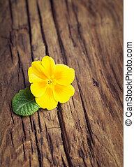 花, 葉, サクラソウ, 木製である, 型, 黄色緑, 背景