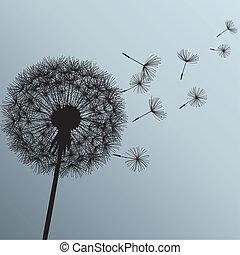 花, 蒲公英, 上, 灰色的背景