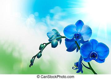 花, 蘭花