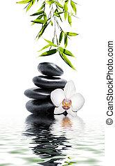 花, 蘭, 白, 竹