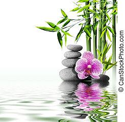 花, 蘭, 紫色, 竹