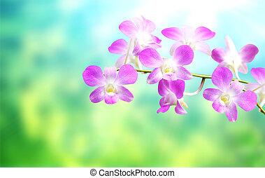 花, 蘭, 背景, ぼんやりさせられた