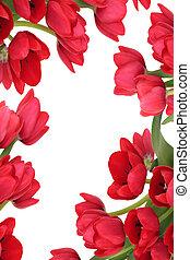 花, 赤いチューリップ, 抽象的