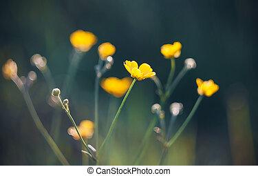 花, 長い間, blossomed, 茎, 夏, 有害, キンポウゲ, 黄色