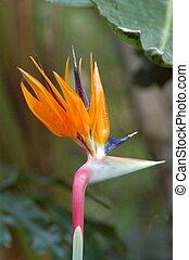 花, 鳥, パラダイス