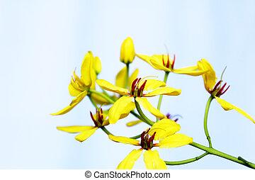 花, 黄色の背景
