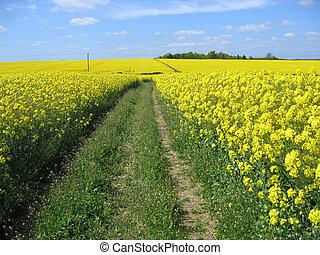 花, 黄色