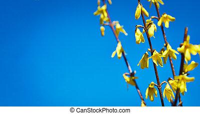 花, 黄色, 咲く, 春, 背景