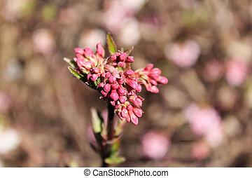 花, blured, 背景, 赤