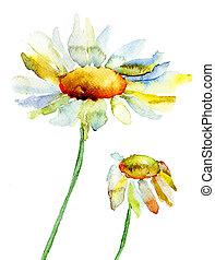 花, camomile