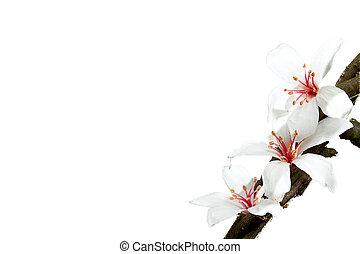 花, dring, 花, 春, 色, 季節, タング, すてきである