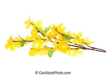 花, forsythia