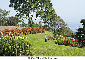 花, garden.
