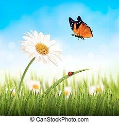 花, illustration., 自然, 春, ベクトル, デイジー, butterfly.