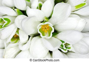 花, snowdrop