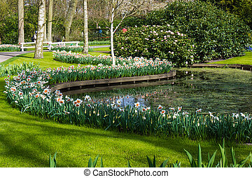 花, spring., 庭, 公園