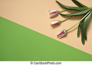 芸術, チューリップ, 色, 春, バックグラウンド。, 緑, ベージュ, デザイン, 花, 最小である