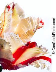 芸術, 春, チューリップ, 美しい, 花