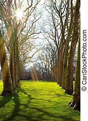 芸術, 春, 日光, 森林, 緑, 時間
