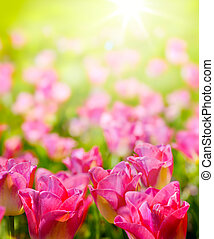 芸術, 春, 日光, 野生, backsround, 花