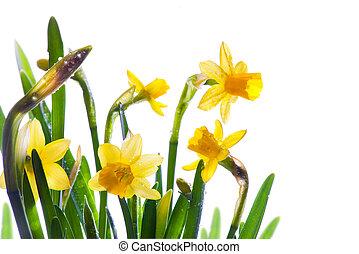 芸術, 春, 日光, 露, 野生, カバーされた, 花