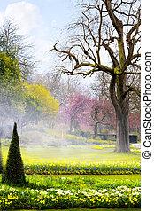 芸術, 春, 英語, 花, 公園