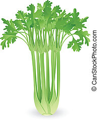 芹菜, 插圖, 束