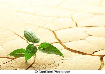 芽を出す, 植物, 砂漠