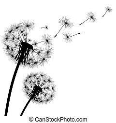 芽, 黑色半面畫像, 蒲公英, 飛行, 黑色的背景, 白色