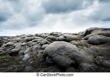 苔蘚, 領域, 在, 冰島
