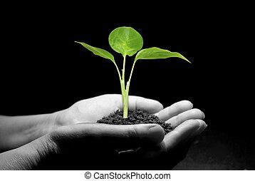 苗木, 手を持つ