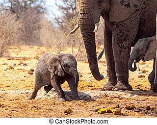 若い, アフリカの象, 遊び, 中に, ∥, 泥, etosha の 国立公園, ナミビア