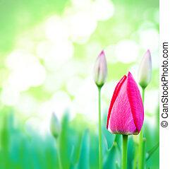若い, 草, 緑, チューリップ, ピンク