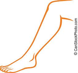 英尺, (woman, 婦女, leg)