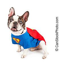 英雄, ブルドッグ, 犬, フランス語, 衣装, 極度