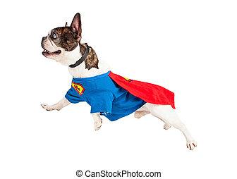英雄, 上に, 飛んでいる犬, 白, 極度