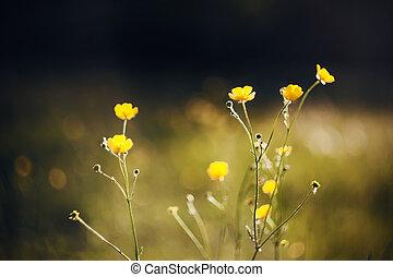 茎, sunlight., 照らされた, 花, 薄くなりなさい, 花, キンポウゲ, 暗い, 牧草地, 黄色, 中央