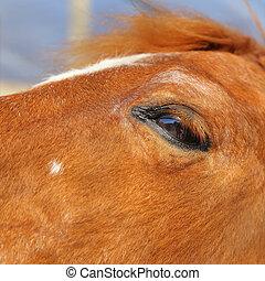 茶色の馬, 目, の上, 背景, ぼやけ, 終わり