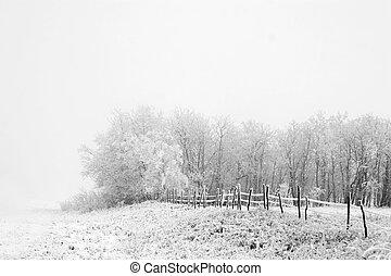 草原, 霧
