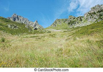 草地, 在上, 山坡, 同时,, 高峰, 邻近, chamonix, 在中, 法国