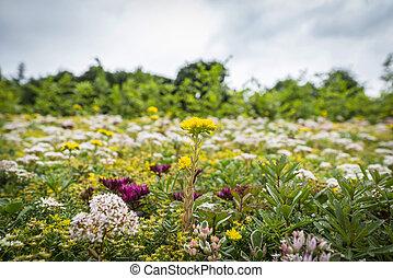 草地, 带, a, 品种, 在中, 色彩丰富的花