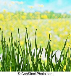 草地, 春天, 細節