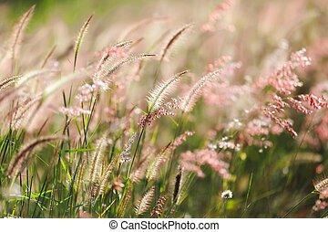 草地, 阳光, 在下面