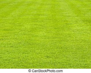 草坪, 在中, 春天
