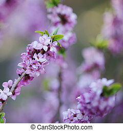 草木の栽培場, 背景, 春, ぼんやりさせられた, 群葉, 花