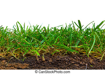 草皮, 十字路口段