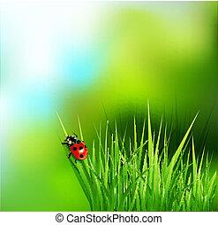 草, そして, てんとう虫