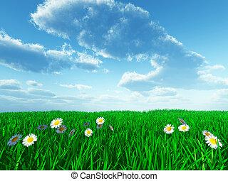 草, そして, 白い花, 上に, フィールド, 中に, 太陽, 夏の日